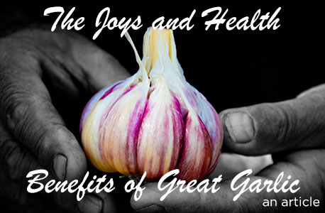 The Story of Great Garlic