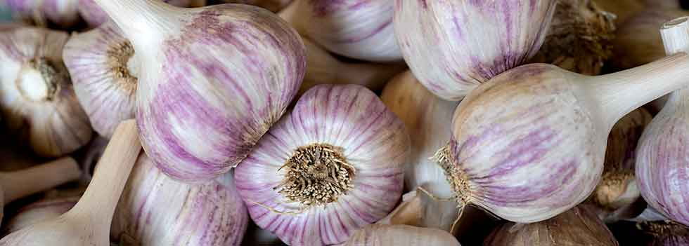 Washington Organic Hardneck Garlic