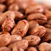 Cranberry Beans - Dried - Zursun