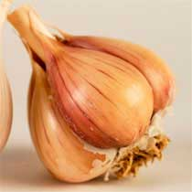 Georgian Fire Organic Garlic - 1/2 pound