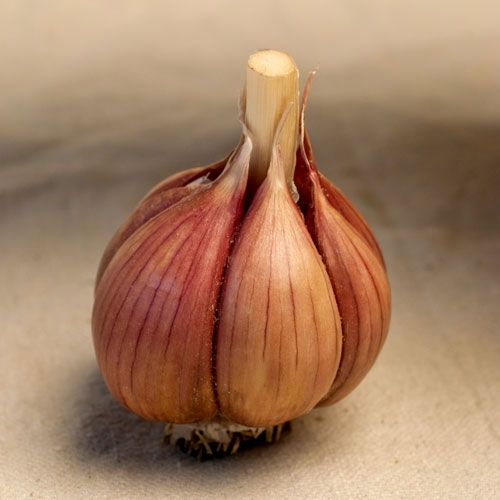 Zemo Organic Garlic - 1/2 pound
