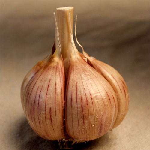 Music Organic Garlic - 1/2 pound