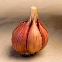 Purple Italian Organic Garlic
