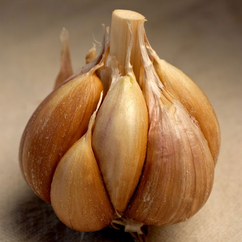 Killarney Red Organic Garlic - 1/2 pound