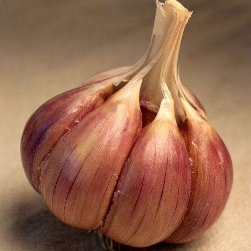 Brown Tempest Organic Garlic - 1/2 pound