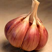 Brown Tempest Organic Garlic