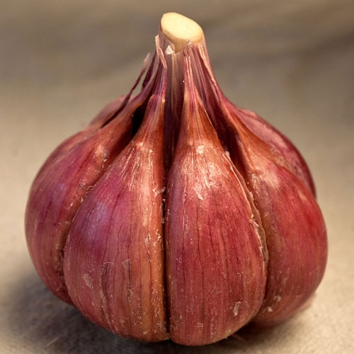 Purple Glazer Organic Garlic - 1/2 pound