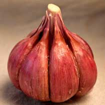 Purple Glazer Organic Garlic