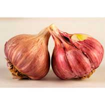 Chesnok Red Organic Garlic - 1/2 pound