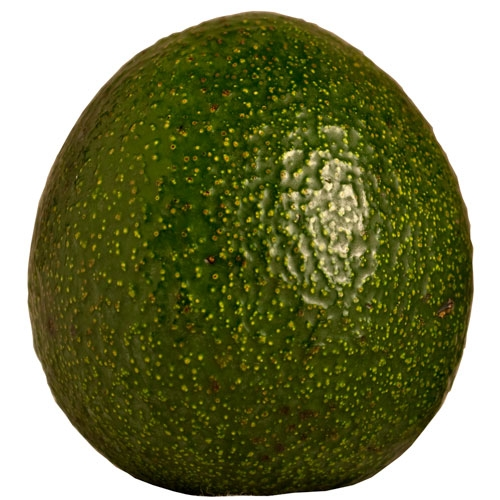 Organic Reed Avocado
