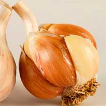 Spanish Roja Organic Garlic - 1/2 pound