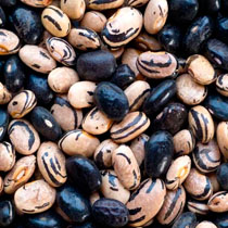 Peregion Beans - Willowood Farm - Dried