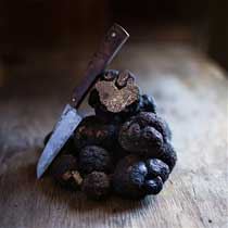 Fresh Black Perigord Winter Truffles - 2 pounds