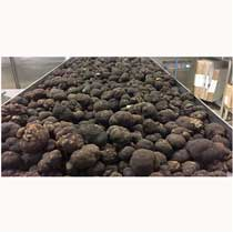 Fresh Black Perigord Winter Truffles - 1 pound