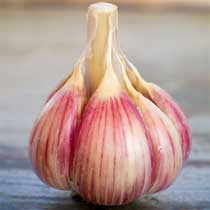 Killarney Red Organic Garlic