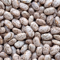 Pinto Beans - Organic - Dried
