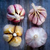 Organic Garlic Sampler