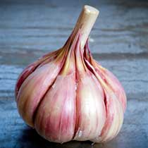 Persian Star Organic Garlic