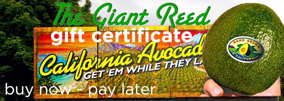 Gift Certificate of the Giant Reed Avocado