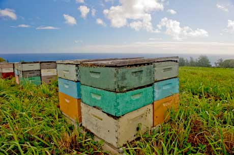 Organic Big Island Bees Hawiian Honey