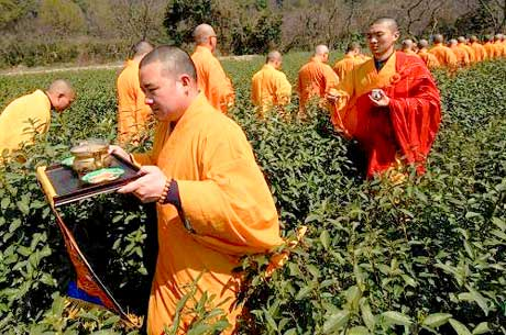 Monks bless the tea fields, Zen Tea.