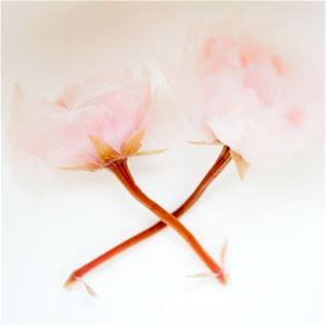 Japanese Salted Cherry Blossom Flowers Sakura For Sale