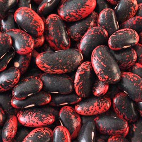Scarlet Runner Beans - Dried