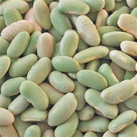 Dried Flageolet Beans Green Kidney Beans Chefshop