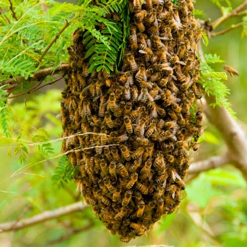 The ABC's of Bees & Honey - Article